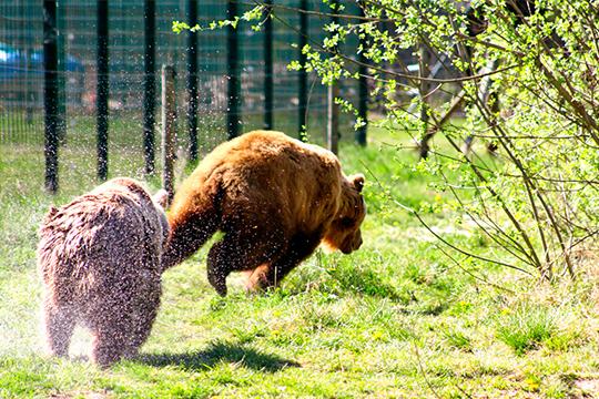 Gnadenhof für Bären in Bad Füssing